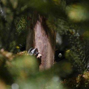 EchoNopiwood Χριστουγεννιάτικο δέντρο Full PE και ξύλινο κορμό σε ύψος 240 εκ