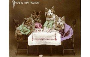 Vintage χειροποίητος πίνακας με φωτογραφία γατάκια να &kappa
