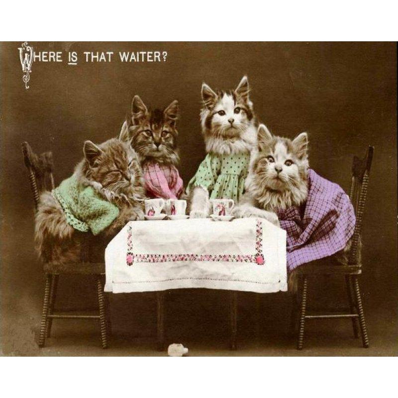 Vintage χειροποίητος πίνακας με φωτογραφία γατάκια να κάθονται σε τραπέζι